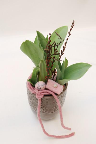 Topf mit Tulpe rosa-taupe Ø13cm H30cm -frisch-