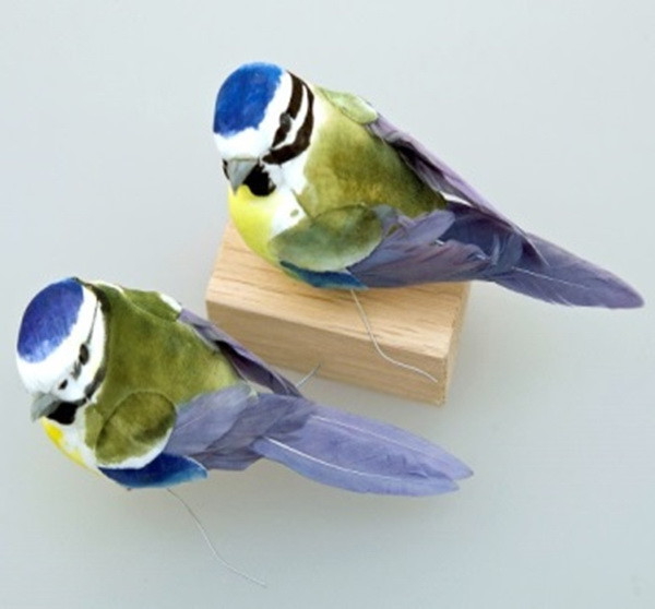 Vogel Meise in Box (12)