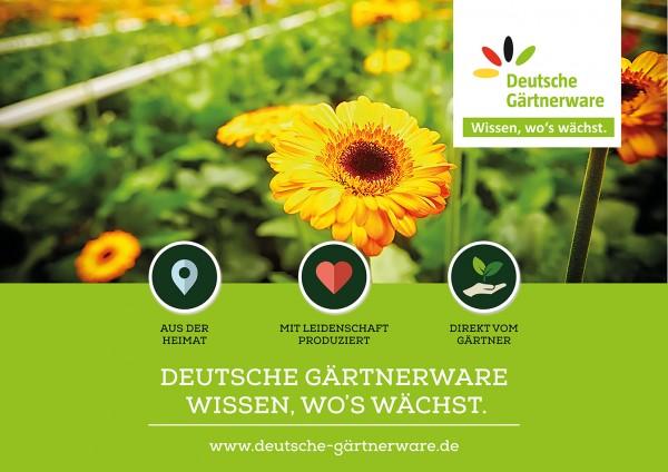 18/1 Plakat - 356x252cm - Deutsche Gärtnerware